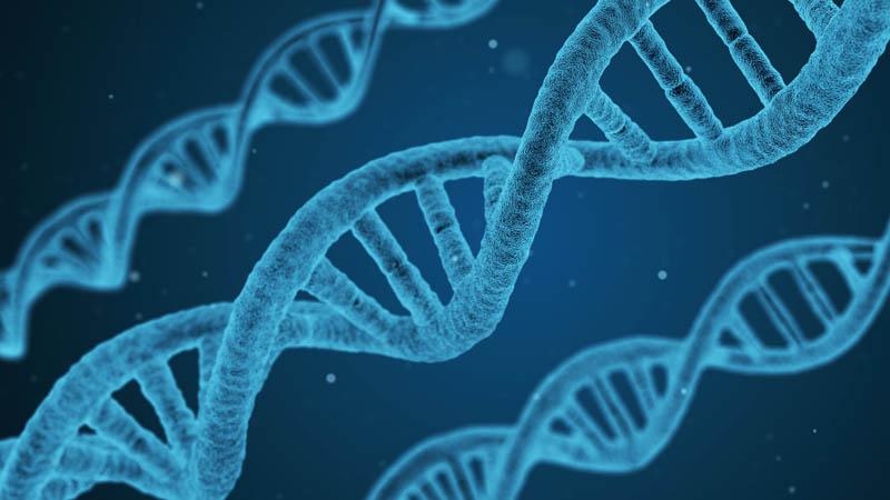 Génétique. L'inné plus fort que l'acquis ?