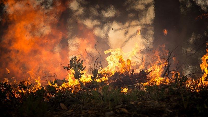 Amazonie : « L'incendie, un élément vital dans le cycle de vie des écosystèmes »