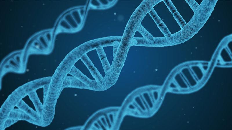 «L'identité d'un peuple, c'est sa génétique ! »