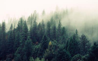 Référendum « écologiste » : quand « effet de serre » rime avec « autoritaire »